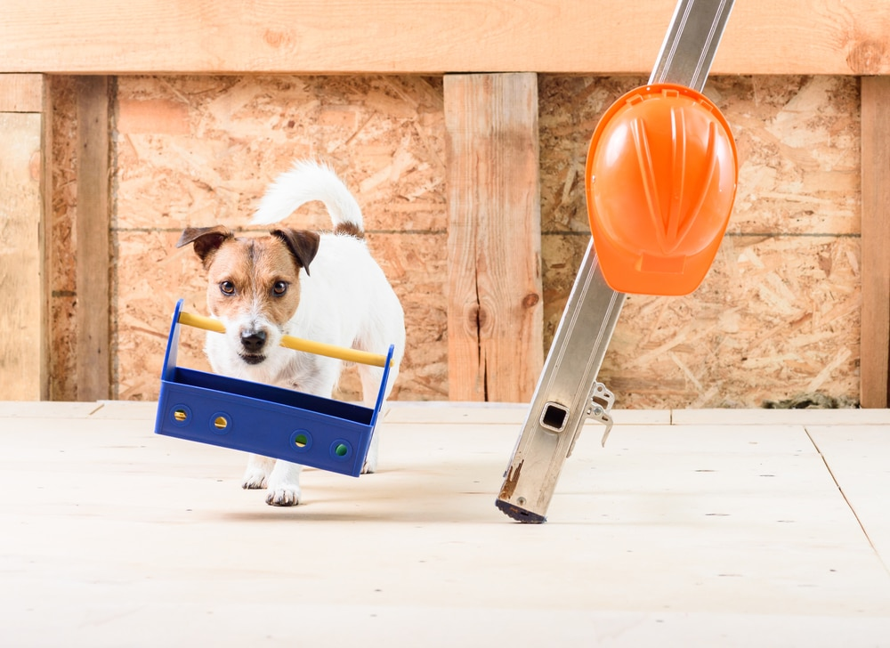 A doggy at a construction site holding a tool box in his mouth by the handle next to a ladder with a construction hat hanging on it